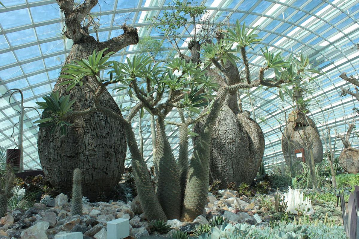 Singapore Indoor Garden