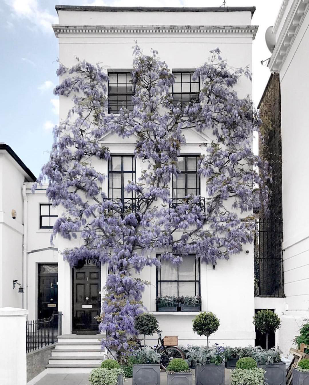 London Apartments Exterior: Wisteria Adds Charming Curb Appeal To London Townhouse