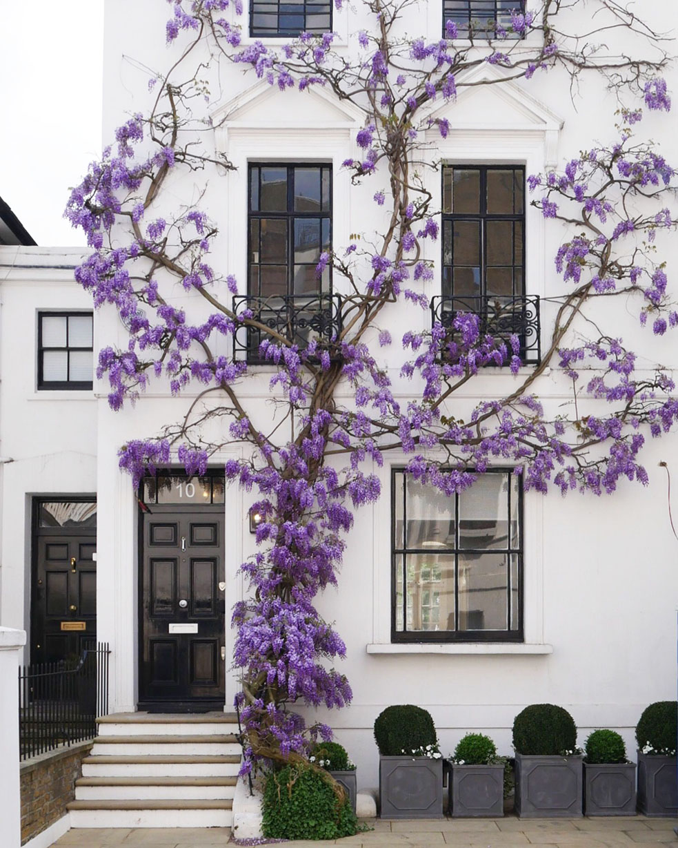 Wisteria Adds Charming Curb Appeal To London Townhouse