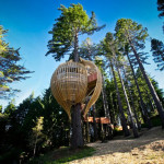 Redwoods Yellow Treehouse